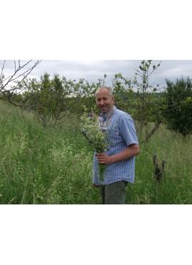 Atelier de cuisine : Cueillette et ramassage des herbes sauvages