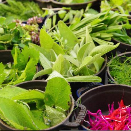 Cueillette d'herbes sauvages