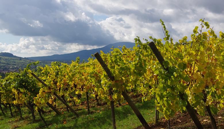 vins-maetz