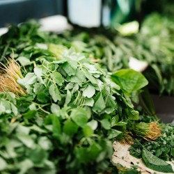 cueillette d'herbe sauvage, ronsenmeer, alsace, hubert maetz, cuisiner avec des herbes sauvages