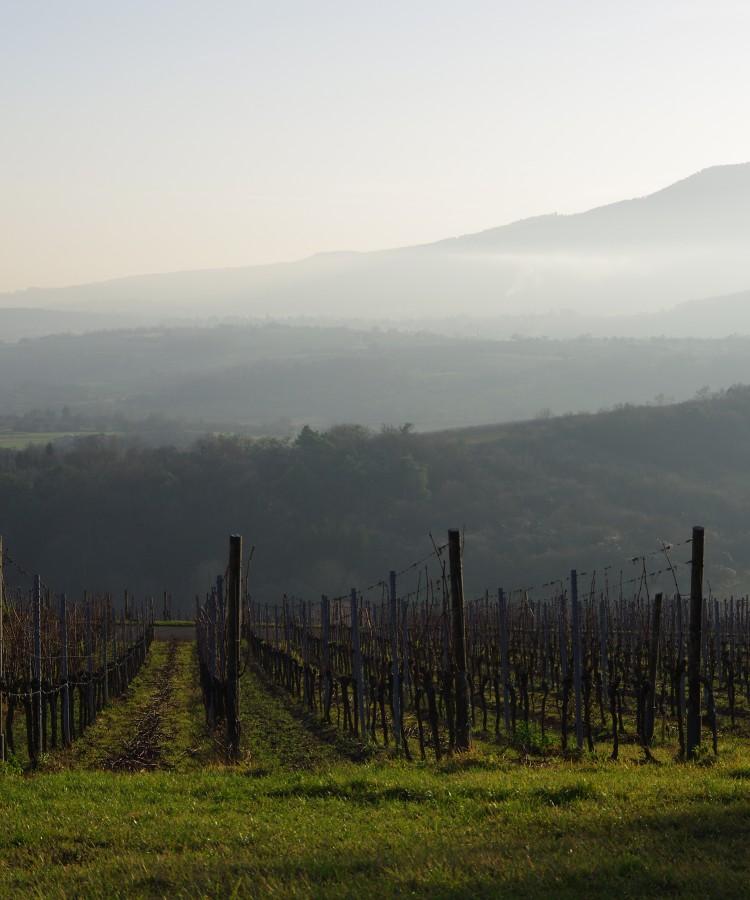 Jean Meyer, un grand monsieur du monde du vin d'Alsace